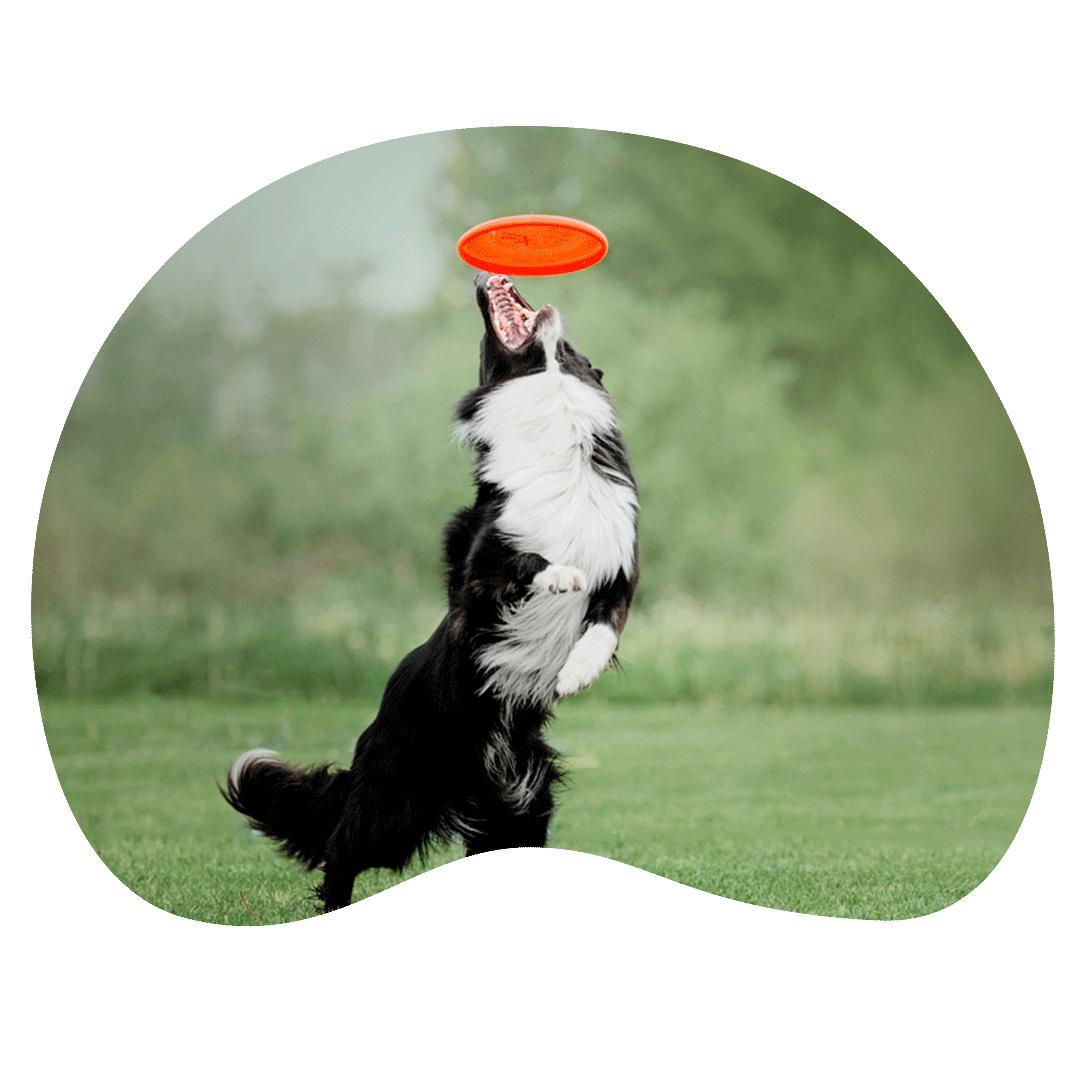 tiendas online de accesorios de animales