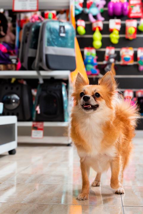 las mejores tiendas de accesorios de animales